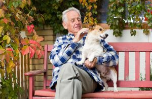 petcure oncology brain tumor cancer information
